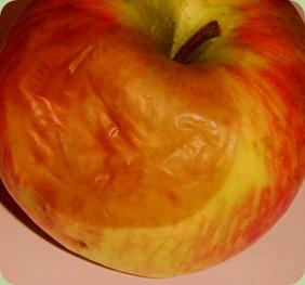 apples2 002